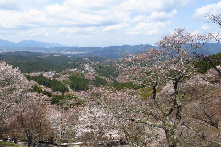 吉野 山肌を染める桜